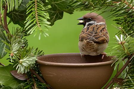 brown sparrw on round brown ceramic bowl