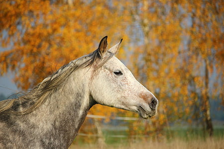 shallow focus photography of horse head