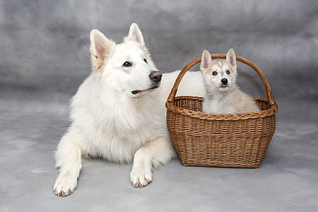 dog sitting on ground beside basket