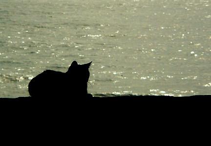 silhouette of cat on seashore
