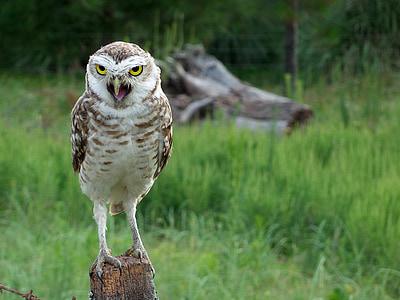 selective focus photograph of owl