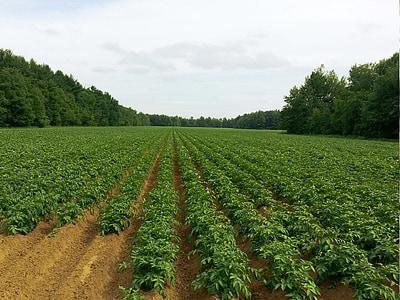 green plants on field between trees