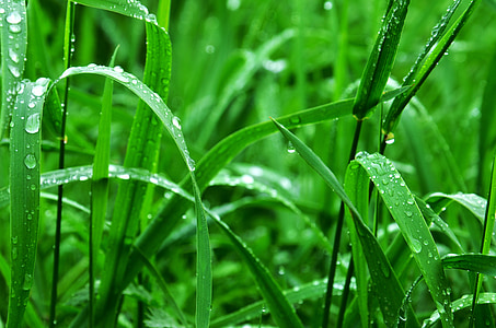 green grasses with dewdrops at daytime