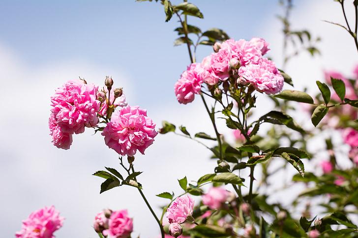 closeup photo of pink flowering tree in bloom