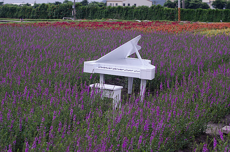 white wooden grand piano with chair in middle of lavender field
