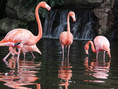 four flamingo on body of water