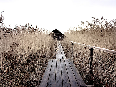 grayscale photography of bridge with grass