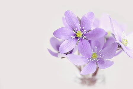 purple petaled flowers with white background
