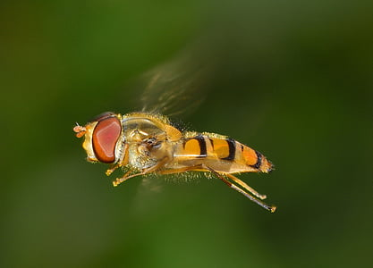 selective focus photo of yellow hoverfly flying