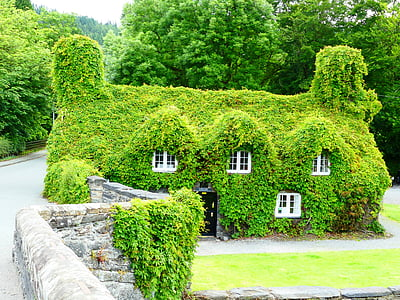 house surrounded by green leafed house