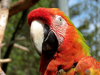 closeup photo of red, green, and white parrot