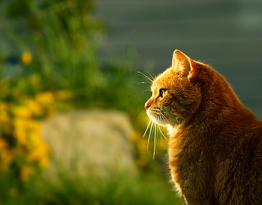 selective focus photography of orange tabby cat