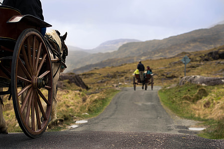 horse carriage on grey concrete road at daytime
