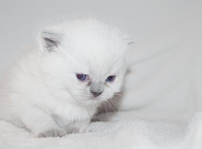 long-fur white kitten on white textile