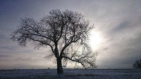 gray tree on the field photography