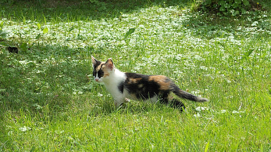 Calico kitten on the green grass field