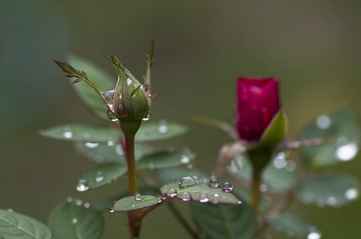 water drops on red and green petaled flowers