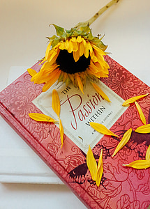 Sunflower on red book