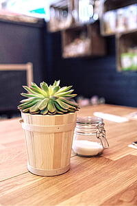 green succulent plant in brown plant