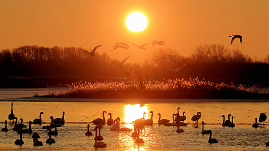 birds on body of water during sunset