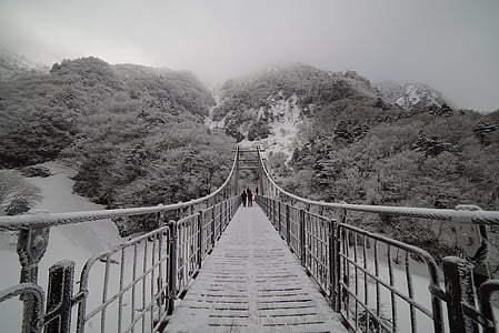 greyscale photo of hanging bridge