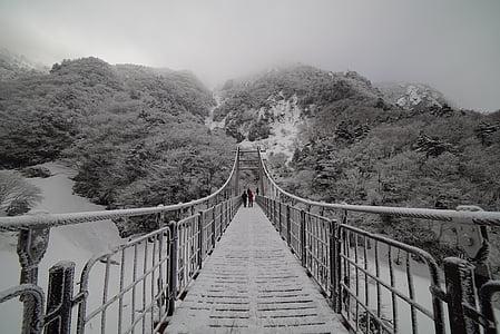 greyscale photo of hanging bridge