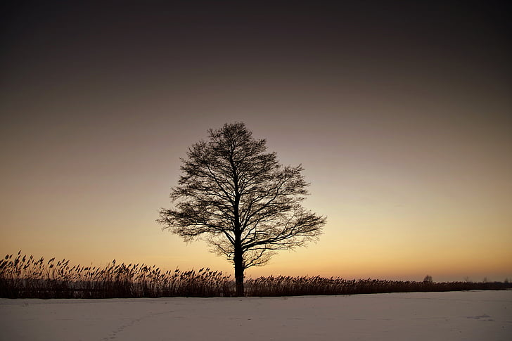 tree during sunset