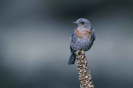 selective focus photography of blue bird perched on brown stem