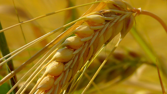 close up shot of grains
