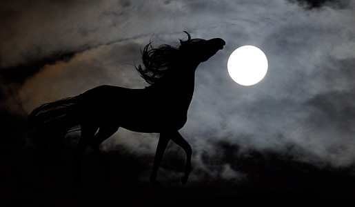 photograph silhouette horse