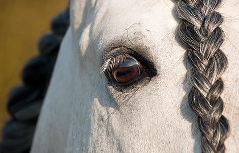 wildlife photography of white horse