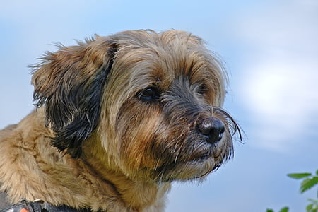 dog, head, animal, pet, wildlife photography, portrait