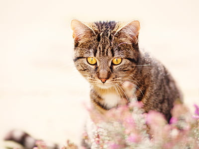 brown tabby cat in closeup photography