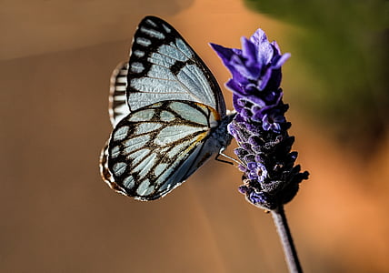 grey and brown butterfly and purple flower
