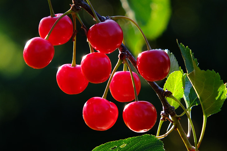 shallow focus photography of red cherries