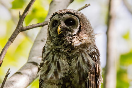 close up photo of brown owl perch on branch