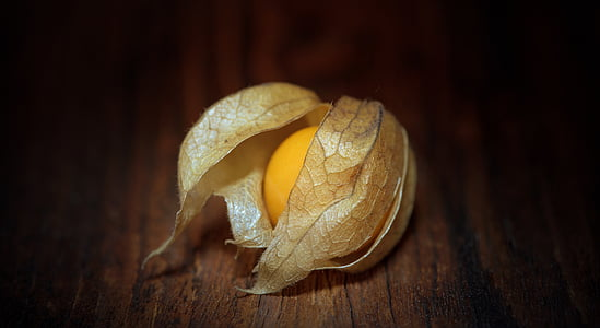 closeup photo of physalis