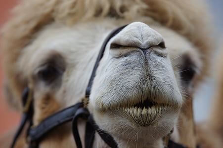 shallow focus photography of brown camel