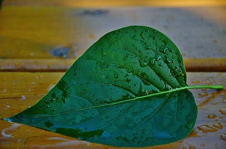 green cordate leaf placed on beige wooden board