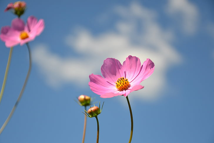 pink and yellow petaled flower at daytime