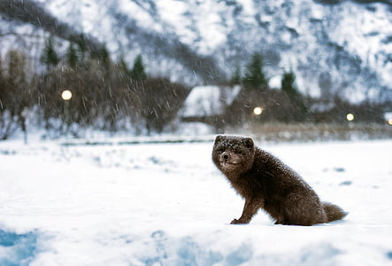 black and gray animal photo during winter