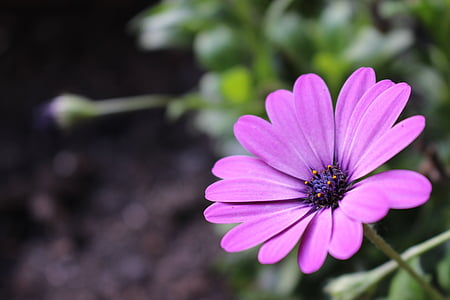 photo of pink petaled flower