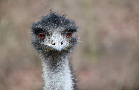 close up photo of ostrich