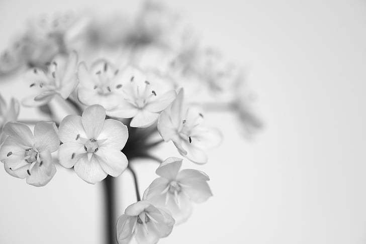 shallow focus photo of white flowers