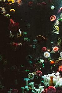 assorted-color corals