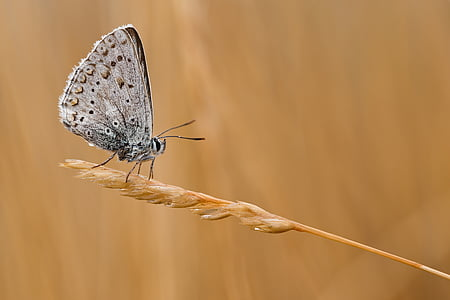 gray butterfly perching on brown plant in close-up photography
