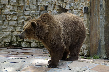 brown grizzly bear near wall