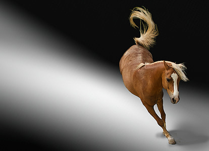 horse galloping at spot light