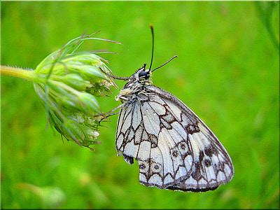 gray and black butterfly on green flower