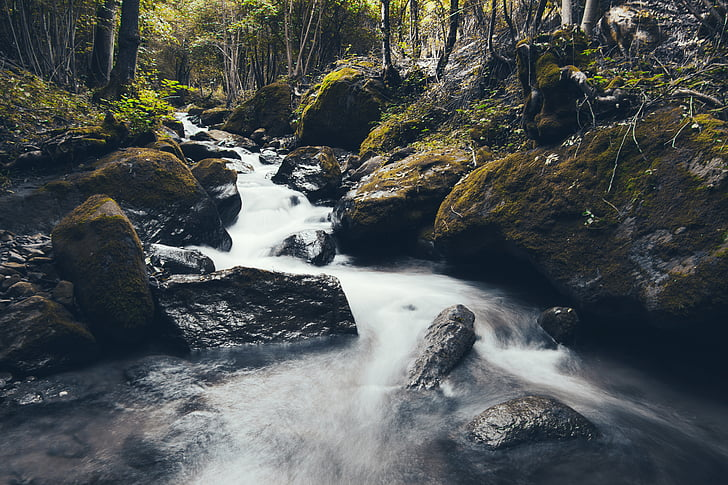 river in forest during daylight